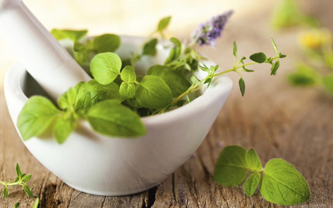 Les plantes qui soignent les aphtes, la mauvaise haleine et les petits maux dentaires…